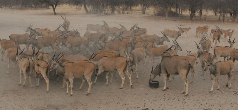 Plains-Game-Bowhunting-Opportunities-Africa.jpg