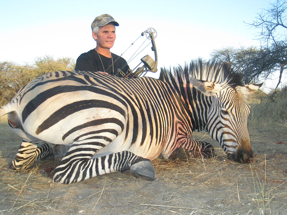bowhunting-zebra-stallion-in-Namibia.jpg