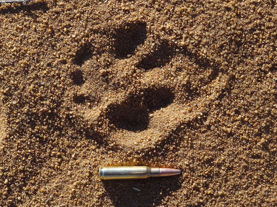 Big-Cat-Track-in-Africa.jpg