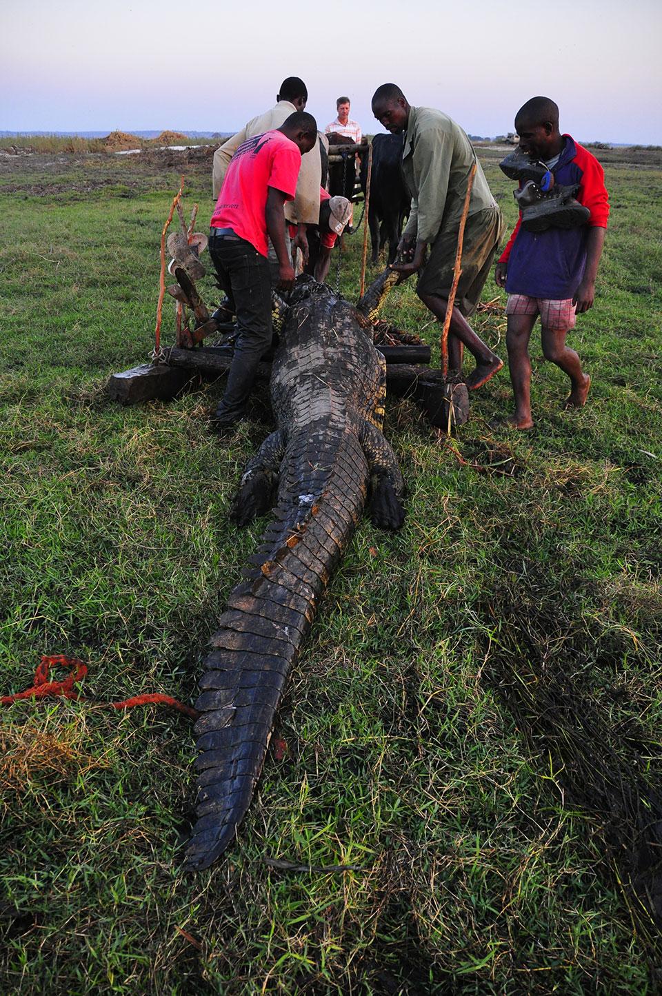Huge-Crocodile-Trophy-hunt-Africa.jpg