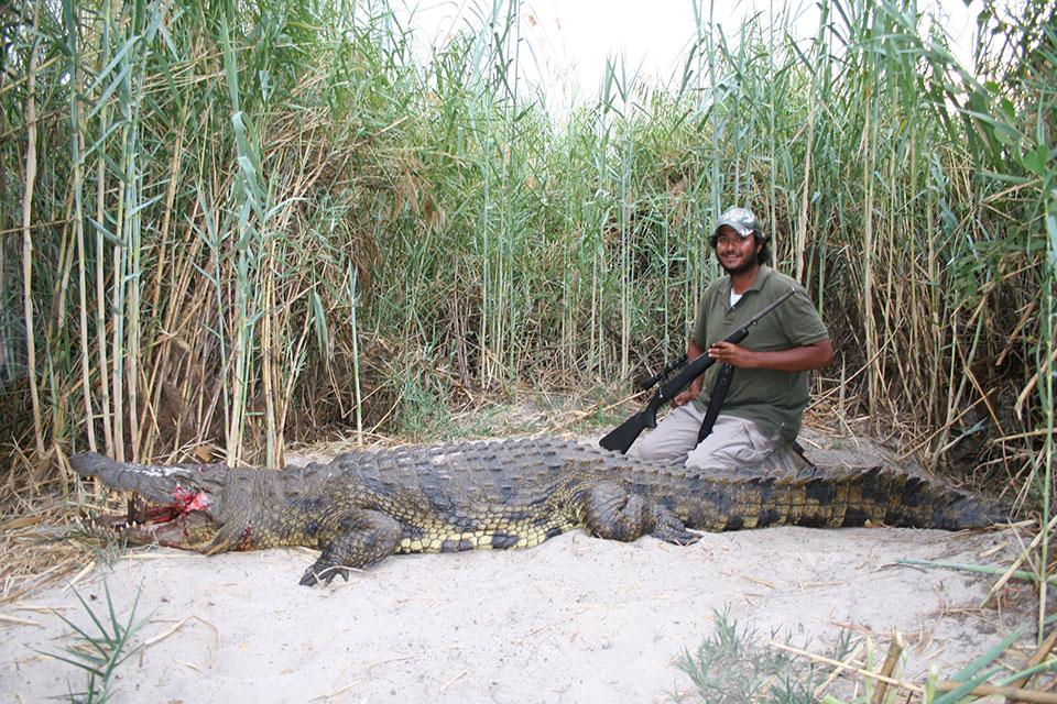 Huge-trophy-crocodile-Namibia.jpg