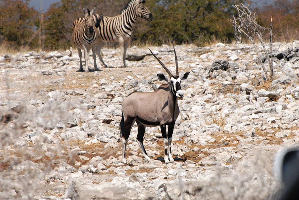 Namibia-AUG-2008-150.jpg