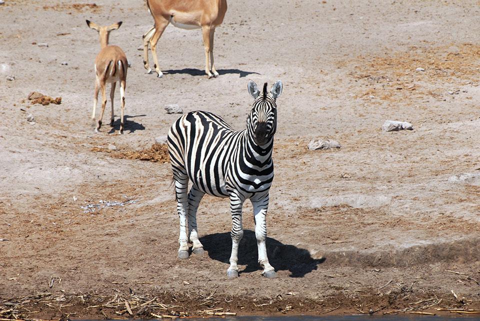 Namibia-AUG-2008-166.jpg
