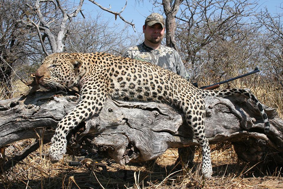 Large-trophy-leopard-hunts-in-Namibia-Africa.jpg