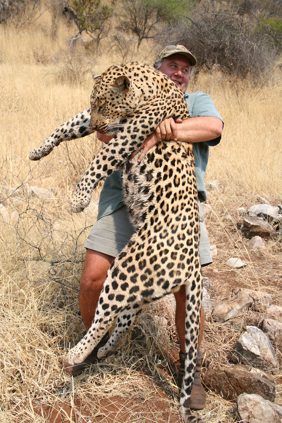 large-male-trophy-leopard-professionally-hunted.jpg